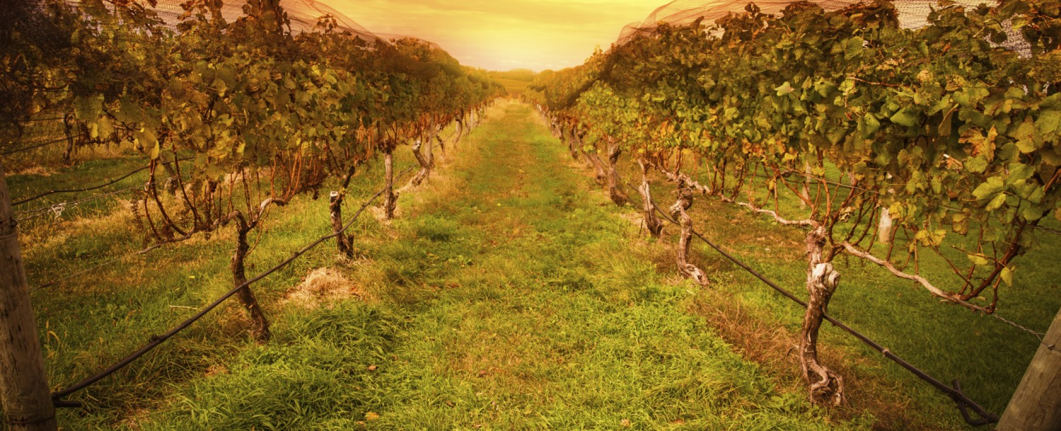 Wineries in Livermore CA