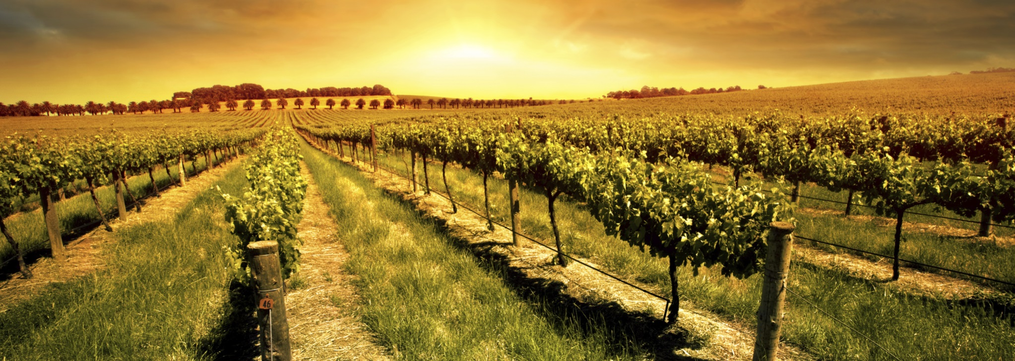 your guide to the best livermore valley wineries the purple orchid