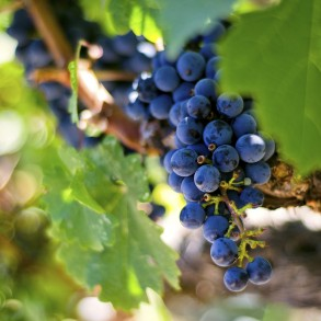 Livermore Valley wineries