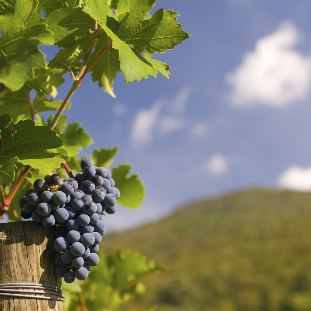 Livermore winery events