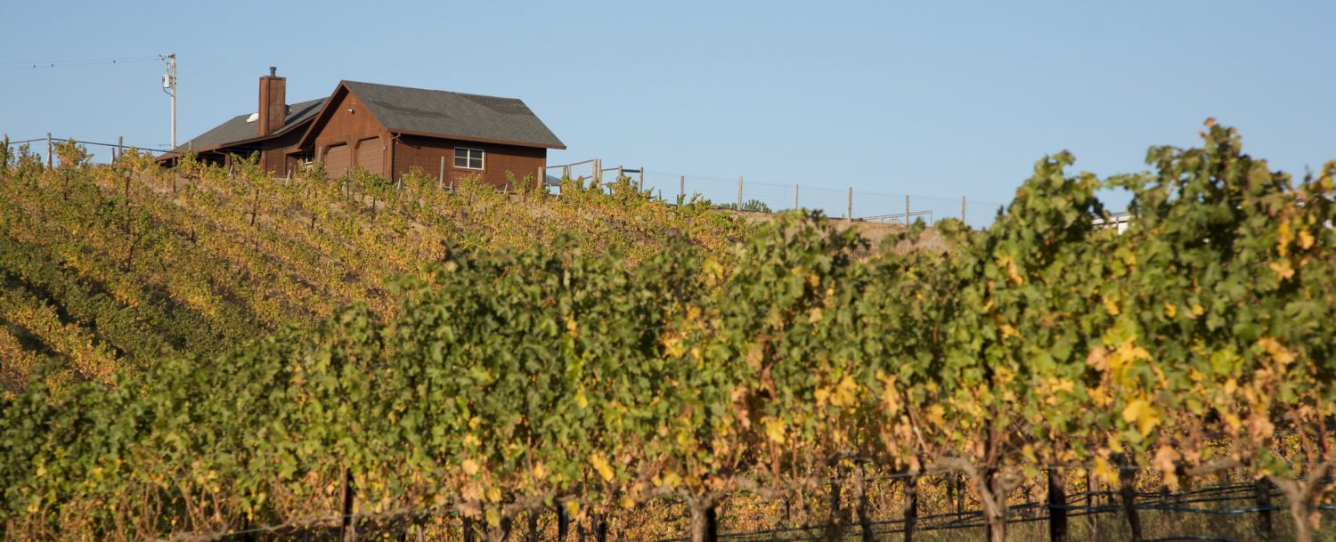 The vineyards in Livermore make weekend trips from San Francisco