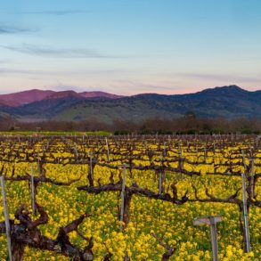 things to do in Pleasanton CA