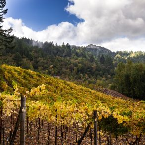 Visit Cedar Mountain Winery, one of California's many vineyards