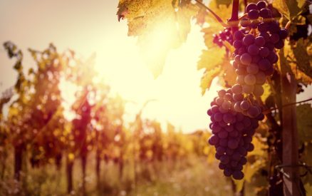 Best Town to Stay in Wine Country California