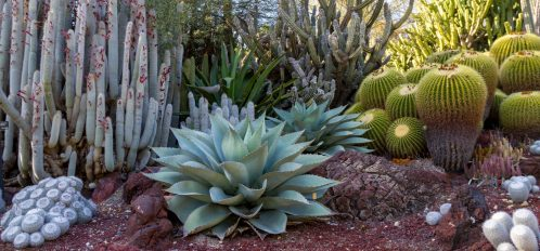 Cacti and flora at a garden in East Bay, just one of the many fun date ideas in the area!