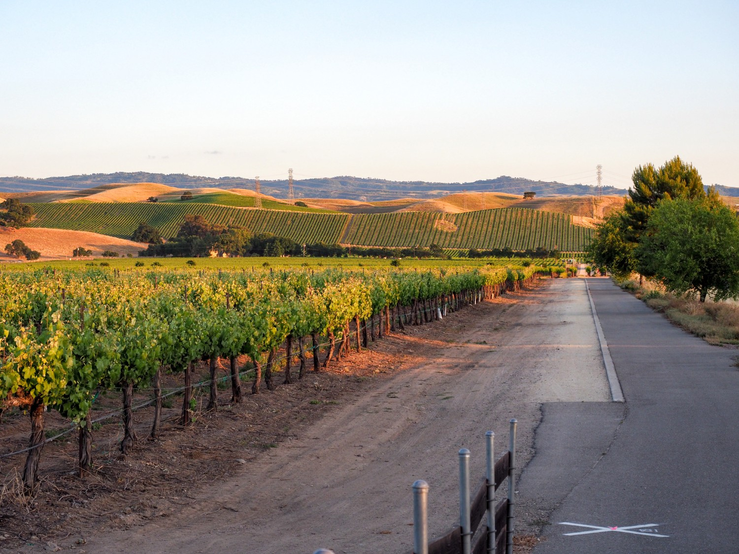 A vineyard and bike trail at sunset in Livermore Valley.