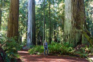 man enjoying hiking in gorgeous redwood park in oakland.