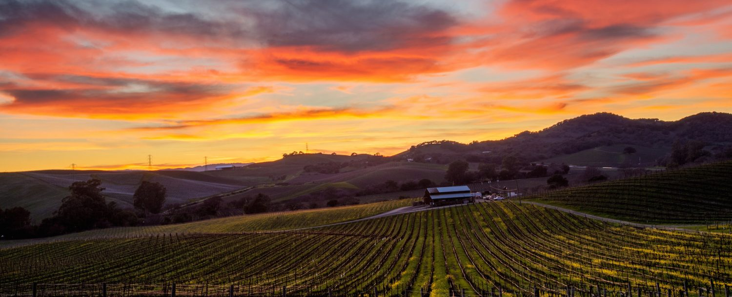 Sunset vineyards in Tri-Valley California.